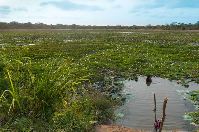 Sø ved Wilpattu National Park